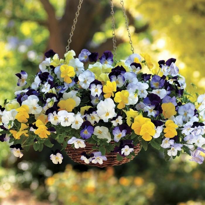 wunderschöner hängepflanzer