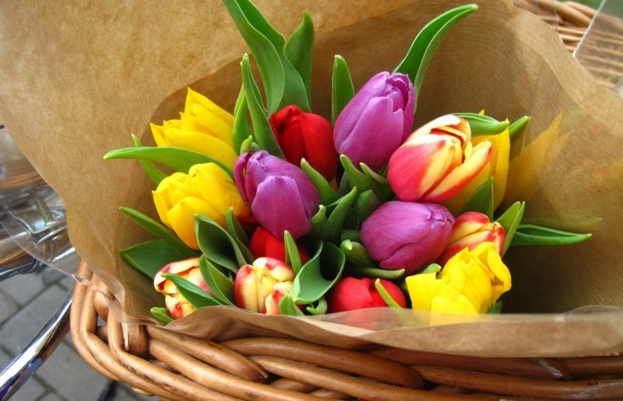 From the implantation to the tulip bouquet - How to care for tulips correctly?