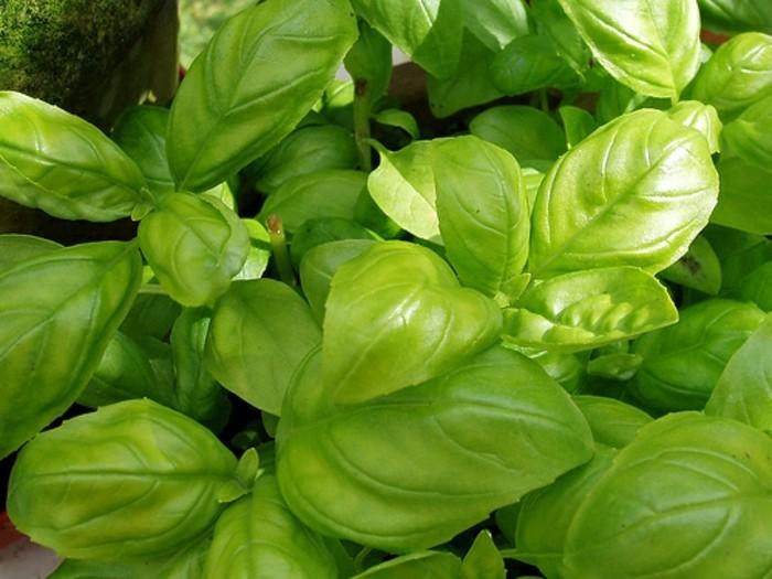 Diese essbare pflanzen k nnen mehrfach erneut wachsen for Pflanzen zu hause
