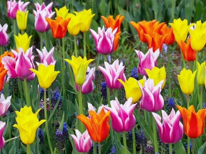 bekannte pflanzen grelle akzente viele farben