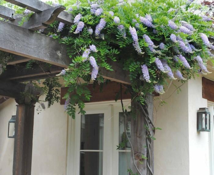 blauregen und pergola wunderschöne gartenideen mit pflanzen