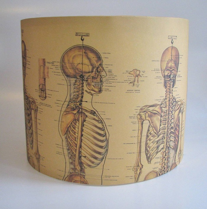 diy lampenschirm dias anatomie