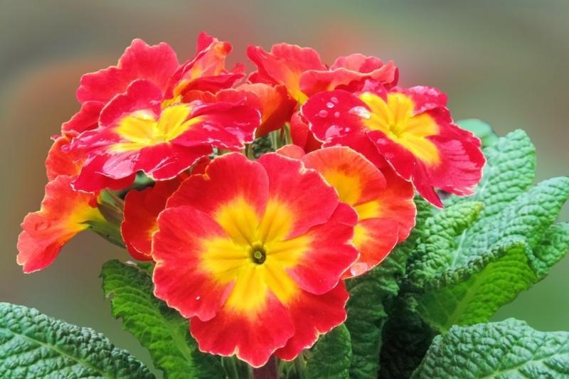 flower 2040617 1280
