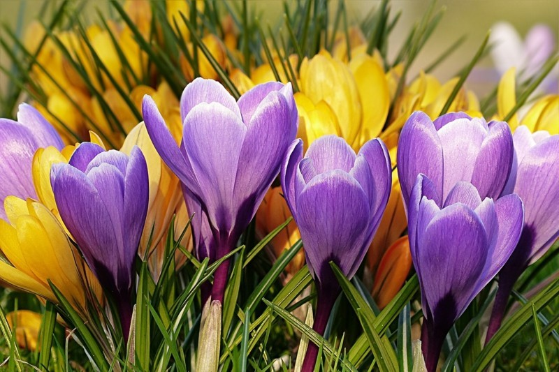 flower 2170814 1280