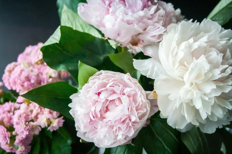 flower power pfingstrosen frühlingsblumen