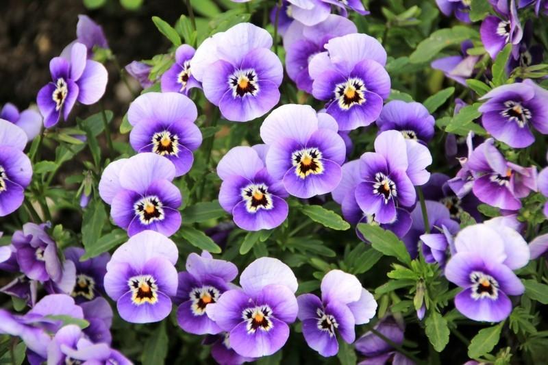flowers 200270 1280