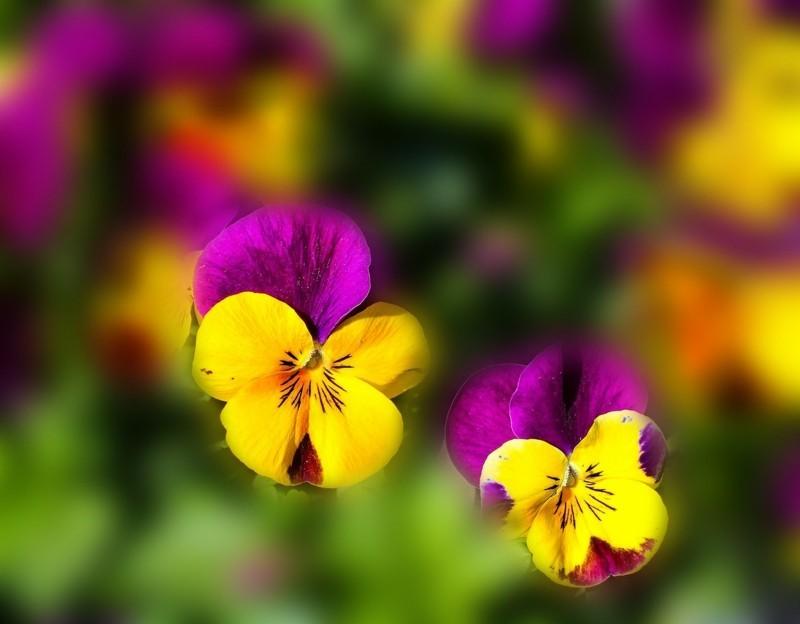 flowers 670192 1280