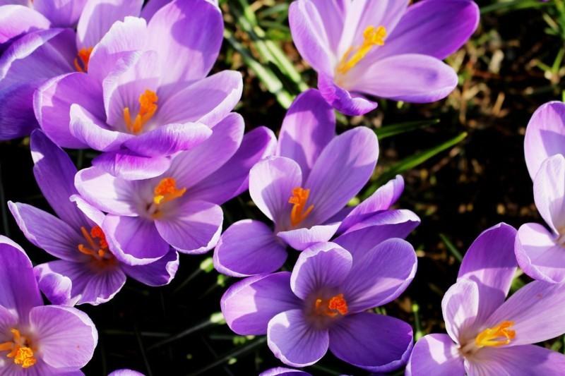 flowers 679829 1280