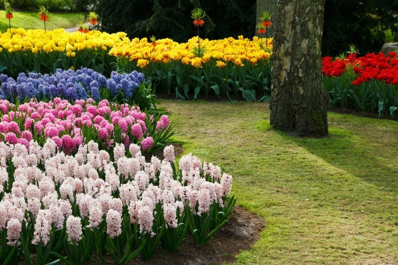 gartengestaltung frühlingsblumen hyazinth