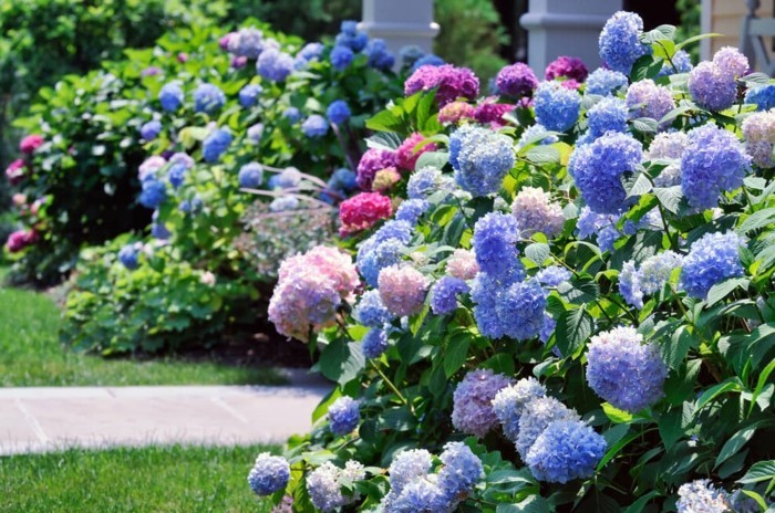 gartengestaltung ideen gartenblumen in pastellfarben