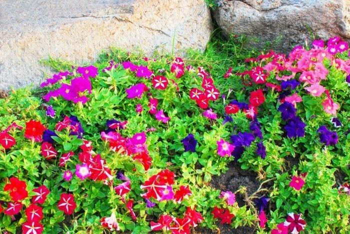 gartengestaltung ideen petunien in verschiedenen farben vermischen