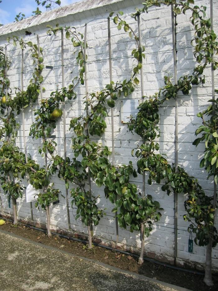 gartenideen mit spalier für die fruchtbäume