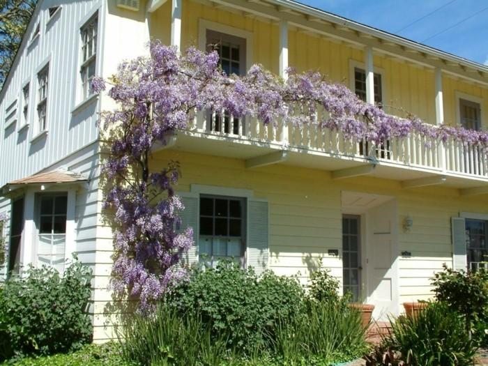 gartenpflanzen mit kletterpflanzen dekorieren wisterie