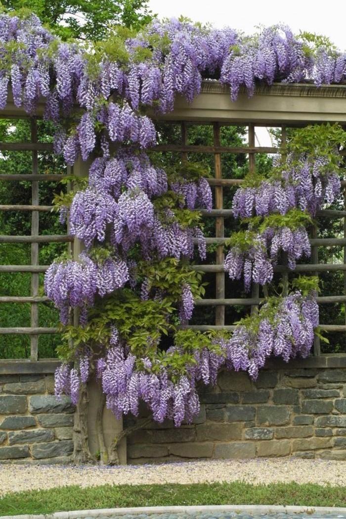 gartenpflanzen wisterie im garten züchten