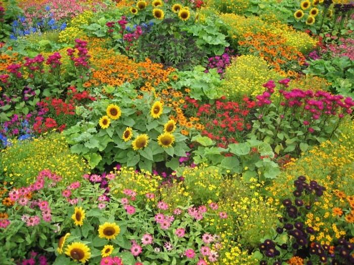 mehrere Farben pflanzengruppen und höhen