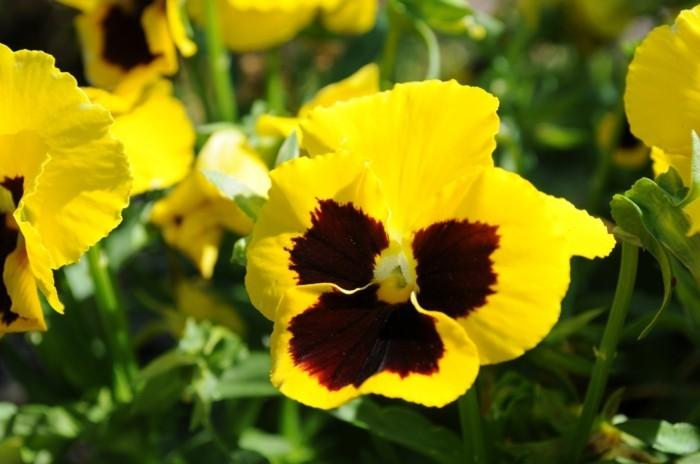 grelles gelb mit rot
