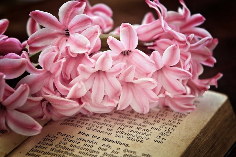 hyacinth flower power pink altes buch