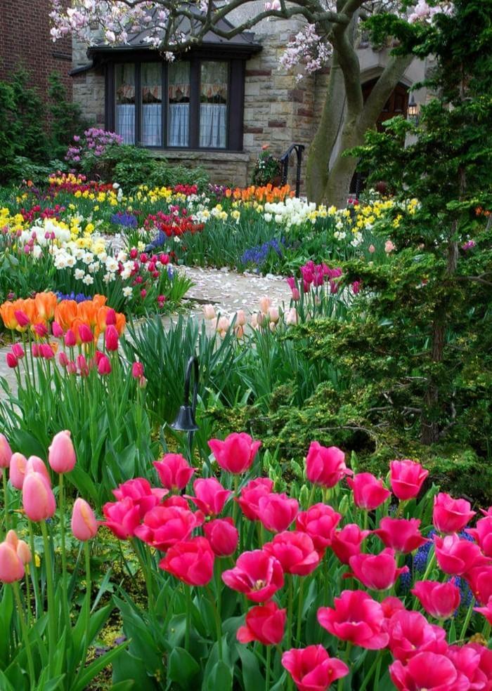 moderne gartengestaltung vorgarten mit tulpen