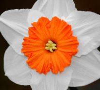 Top 10 der schönsten Frühlingsblumen: Flower Power in 100 Bildern