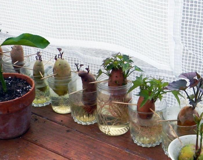 diese essbare pflanzen k nnen mehrfach erneut wachsen. Black Bedroom Furniture Sets. Home Design Ideas