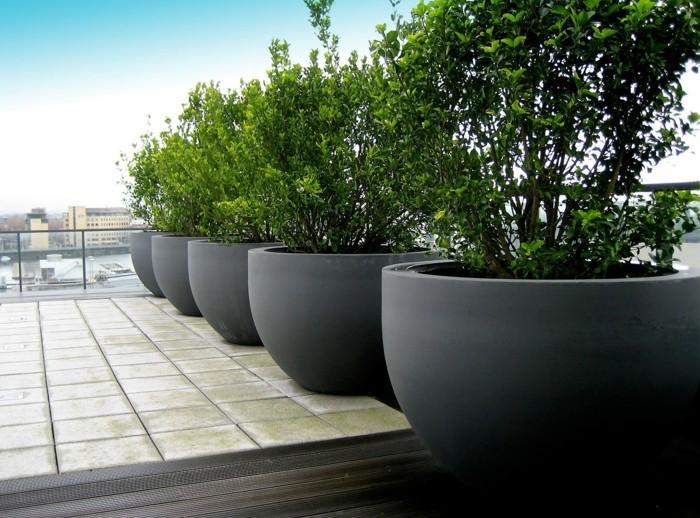 pflanzgefäße für die terrasse sichtschutz und dekoration