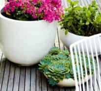 Pflanzgefäße für den eigenen Innen- und Außenraum richtig auswählen