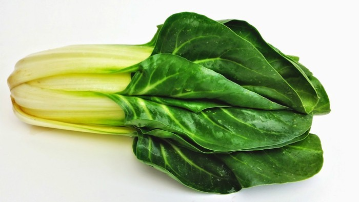 rezepte mit mangold gemüse