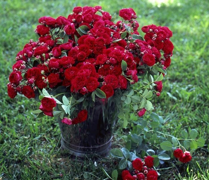 rose die königin der blumen wunderschöne dekoration