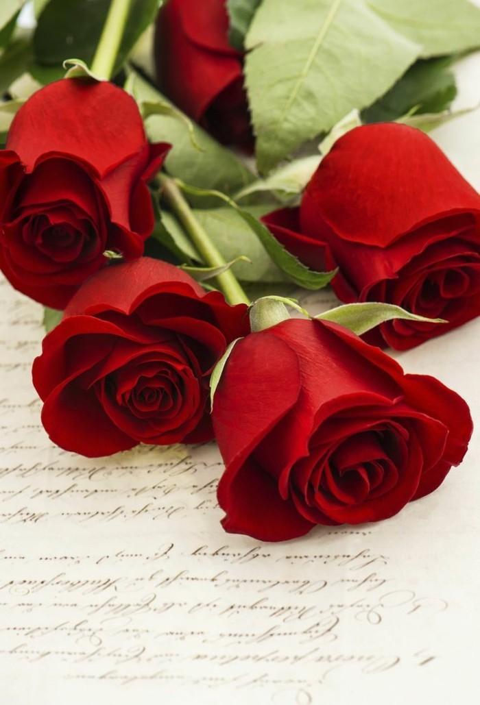 rose in rot symbolisiert leidenschaft und liebe