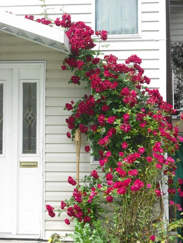 rosen als dekoration der hausfassade