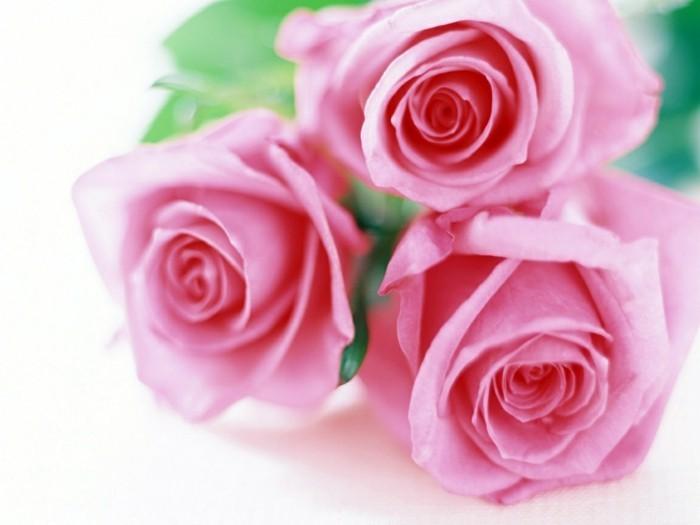 rosen drei rosen als blumenstrauß