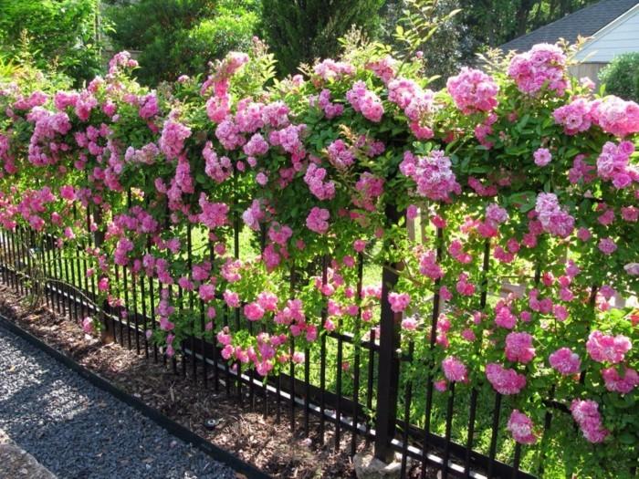 rosen gartenzaun mit rosen dekorieren