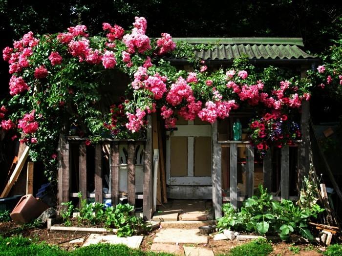 rosen kletterrosen im garten