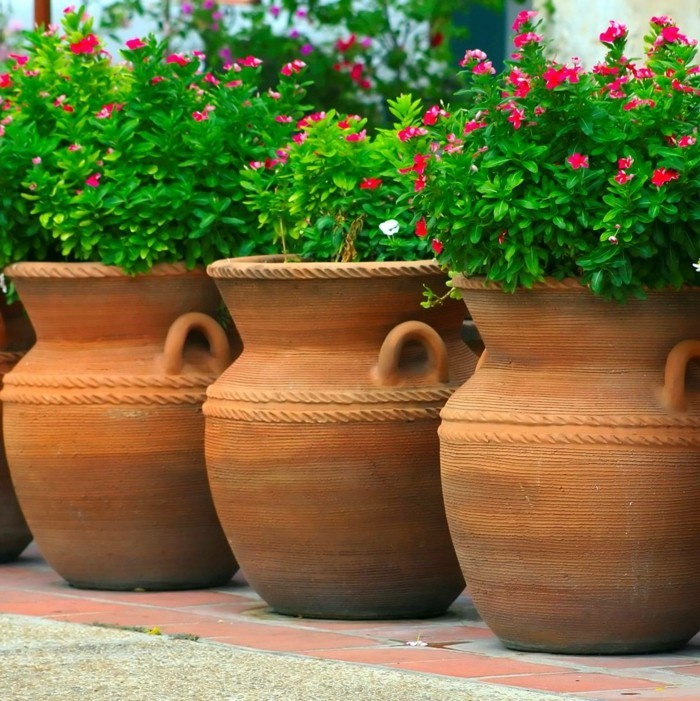 sichtschutz pflanzkübel funktionale gartenideen mit pflanzen