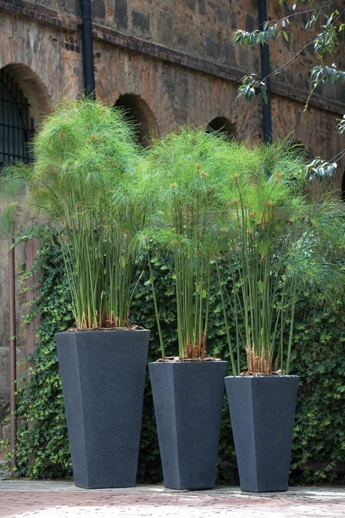 sichtschutz pflanzkübel kreative und schöne gartenideen mit pflanzen