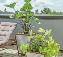 Sichtschutz Pflanzkübel – Sichtschütze können auch dekorativ sein!