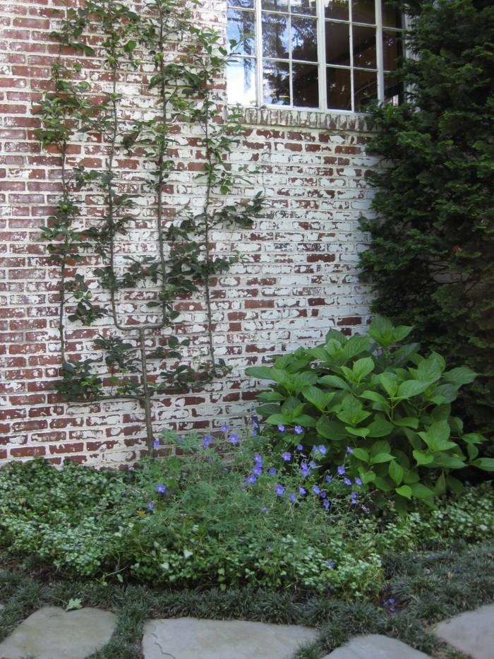 spalier garten gestaltung ideen für die gartenpflanzen