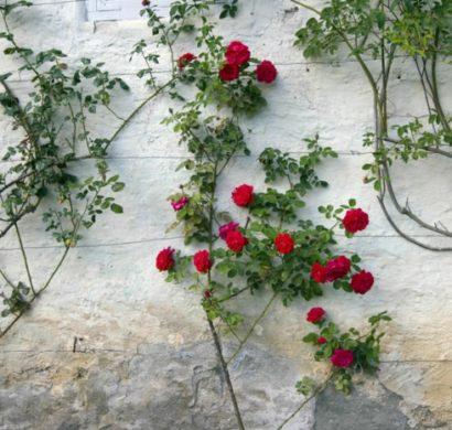 Super Spalier – Rosenbögen und weitere Blumenstützen sind optische @SP_12