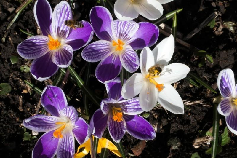 spring 1263002 1280