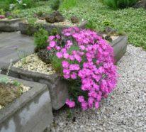 Steingartenpflanzen – unsere 6 Favoriten machen die felsige Landschaft  bunt