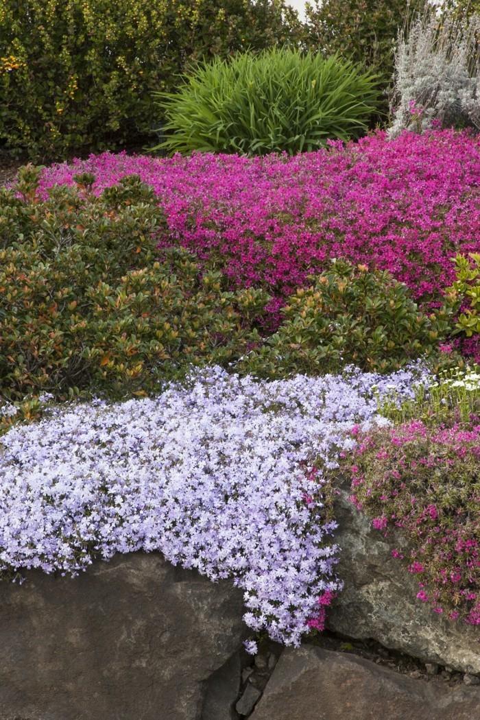 steingartenpflanzen Teppichphlox als akzent im modernen garten