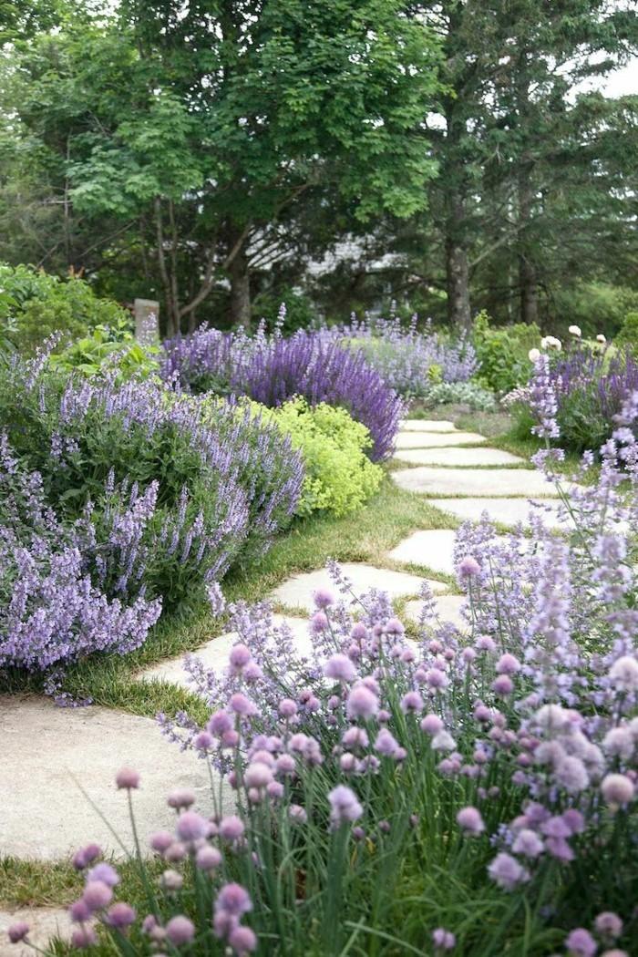 steingartenpflanzen den gartenweg mit pflanzenverschönern