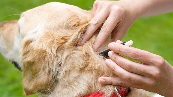 naturreine ätherische öle zecken vertreiben hundeschutz