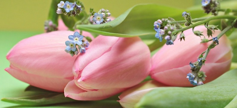 tulips flower power blumeninspiration