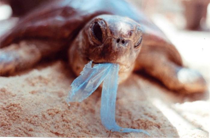 The Ocean Cleanup plastikmüll im meer schildkröte plastik