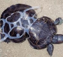 Über das Ocean Cleanup Projekt und das Armband aus Plastikmüll