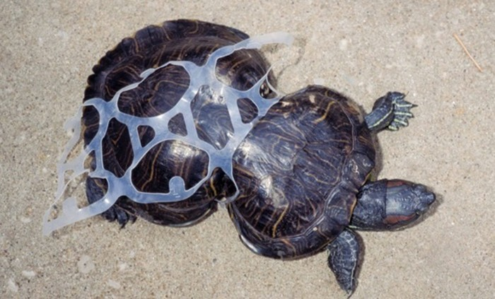 The Ocean Cleanup plastikmüll im meer schildkröte plastik verwachsen