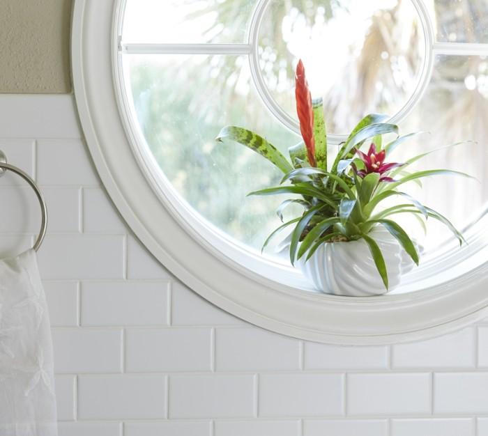 bromelie verschönert das badezimmer auf eine spektakuläre weise