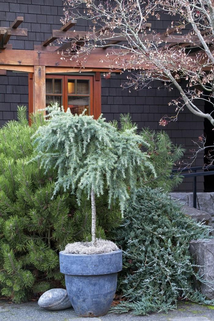 gartenpflanzen Wacholder als solitärpflanze