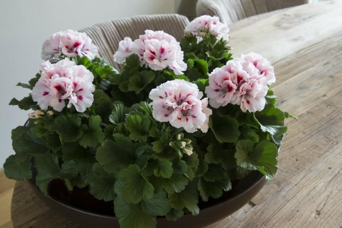 gartenpflanzen für die dekoration der wohnung